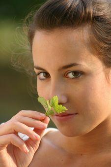 Melissa Leaf Stock Photo