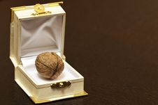 Free Walnut In A Case Stock Photos - 21739513