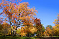 Free Autumn In The Park Stock Photo - 21741950