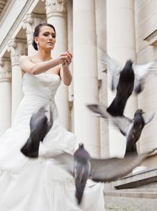 Free Bride Doves Royalty Free Stock Photo - 21741595