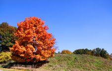 Free Bright Autumn Tree Stock Photography - 21741892