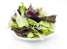 Free Fresh Green Stock Photography - 21742622