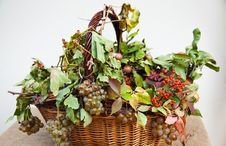 Free Basket With Grapes And Fall Leaves. Stock Photography - 21743882