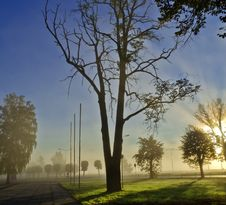 Free Misty Morning In A Park Stock Image - 21747571