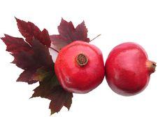 Free Pomegranates Royalty Free Stock Photo - 21748845