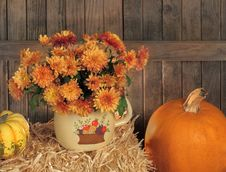 Free Autumn Mums In A Pot Stock Image - 21757351