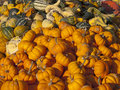 Free Pumpkins And Gourds Royalty Free Stock Images - 21761539