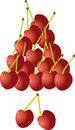 Free Cherries On A White Background Stock Photo - 21761790