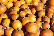 Free Fall Fruit Royalty Free Stock Photo - 21761365