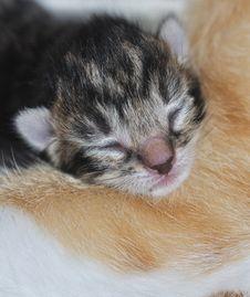Free The Cute Little Head Of A Newborn Kitten Stock Photos - 21767953