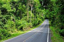 Free Road Along Forest At Khao Yai National Park, Thail Stock Photos - 21773463