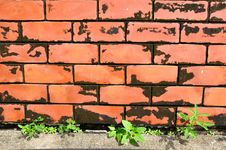 Free Close Up Of Red Brick Wall With Weed Royalty Free Stock Image - 21773646