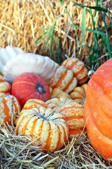 Free Gourds And Pumpkins Stock Photo - 21774290