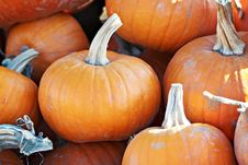 Free Pile Of Pumpkins Stock Photography - 21774372