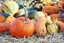 Free Squash Variety Stock Photography - 21774402