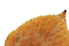 Free Yellow Dried Leaf Stock Images - 21774744