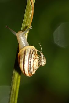 Free Snail Giving Bug A Lift Stock Images - 21778424