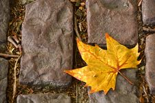 Free Autumn Leaf Stock Images - 21778614