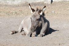 Free Donkey Resting Stock Photography - 21780742