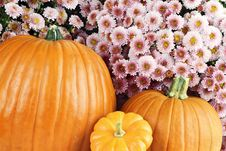 Free Pumpkins And Chyrsanthemums Stock Photography - 21786692