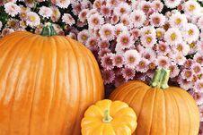 Pumpkins And Chyrsanthemums Stock Photography