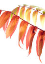 Free Autumn Leaves Stock Images - 21791694