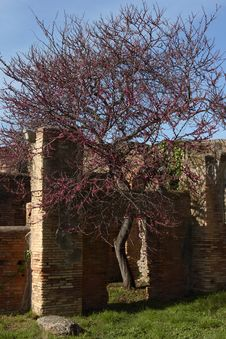 Ostia Antica S Ruins And Tree Royalty Free Stock Images