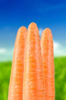 Free Carrots On Summer Background Royalty Free Stock Photos - 21794838