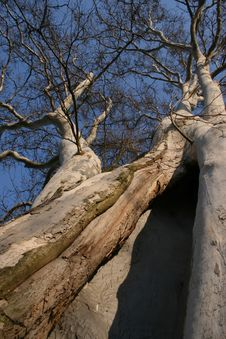 Hollow Tree Stock Images