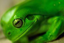 Free Eye Of Frog Royalty Free Stock Image - 2184806