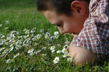 Free Young Child Smelling Flowers Royalty Free Stock Photo - 2187025
