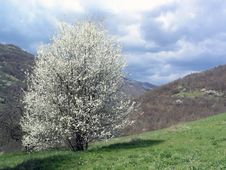 Free Blossom Tree Stock Images - 2187784