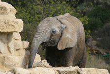 Free Elephant Stock Image - 2187891
