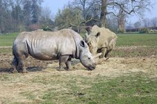 Free White Rhino Stock Photography - 2188082