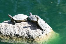 Free Turtles On A Rock Stock Image - 2188481