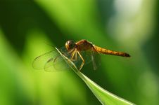 Free Dragonfly Stock Photography - 2188702