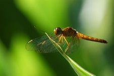 Free Dragonfly Stock Images - 2188704