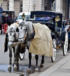 Free Horse-driven Carriage Stock Photo - 21800840