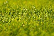 Free Green Grass Stock Image - 21803331