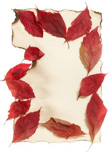 Free Autumn Leaves On Old Paper Royalty Free Stock Photo - 21804205