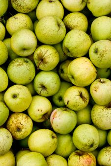 Free Green Apples Royalty Free Stock Images - 21804269