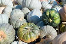 Free Mini Green Pumpkins Royalty Free Stock Photo - 21804625