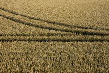 Free Tyre Tracks In Cornfield Stock Photo - 21804860