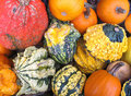 Free Variety Of Colorful Gourds Stock Images - 21817414