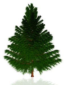 Free Christmas Tree Stock Image - 21810091
