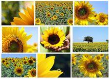 Free Mosaic   Sunflowers Stock Photo - 21813540