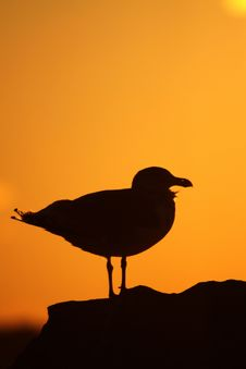 Free Gull At Sunset Stock Photos - 21818123