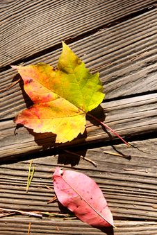 Free Maple Leaf On Wood Royalty Free Stock Photo - 21819385