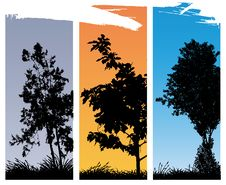 Free Trees Stock Photos - 21819553