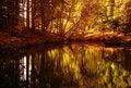 Free Gold Autumn Stock Photos - 21822493